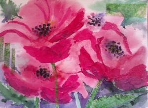 B. Pink poppies